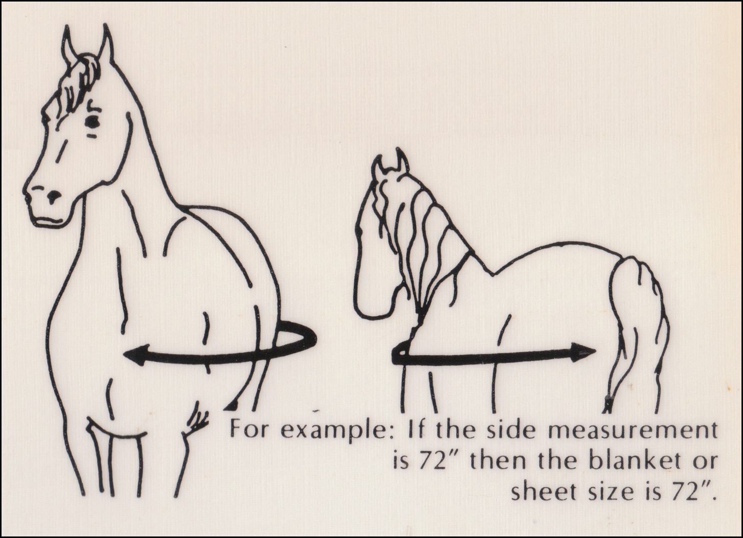 Here is how toHere is how tomeasureyourHere is how toHere is how tomeasureyourhorseto find aHere is how toHere is how tomeasureyourHere is how toHere is how tomeasureyourhorseto find ahorse blanketthat will fit properly. Keep your hores safe and more comfortable with properHere is how toHere is how tomeasureyourHere is how toHere is how tomeasureyourhorseto find aHere is how toHere is how tomeasureyourHere is how toHere is how tomeasureyourhorseto find ahorse blanketthat will fit properly. Keep your hores safe and more comfortable with properblanketfit.
