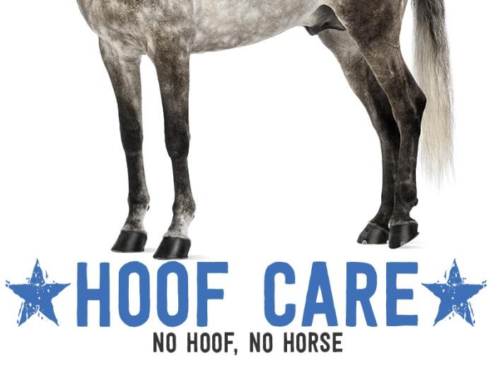 clean horse feet